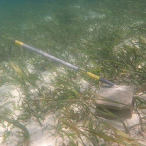 Tilt current meter in seagrass.  Photo by: Heidi Hirsh